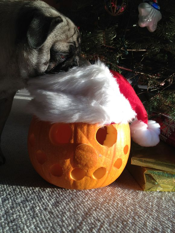 Happy Christmaween?