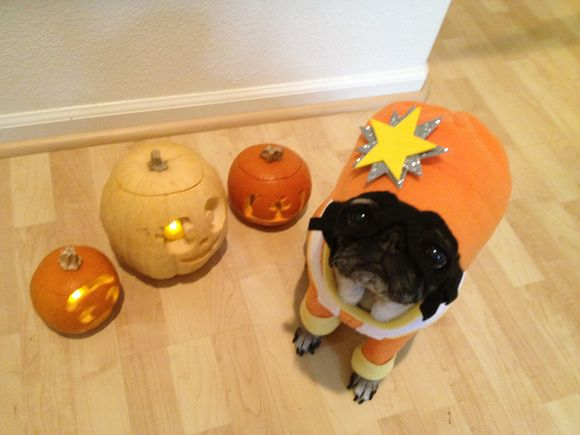 DJ Lance Pug wishes you a Happy Halloween