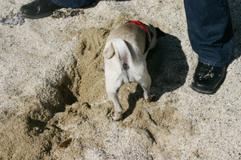 Shelby Learns that Digging is Fun