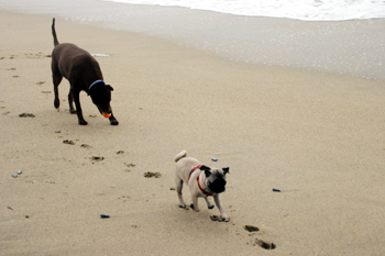 Mocha and Shelby Play Fetch