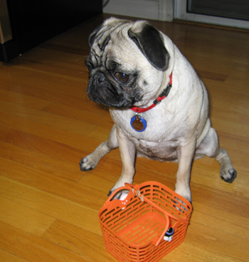 Pug_basket