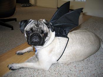 Pug_bat