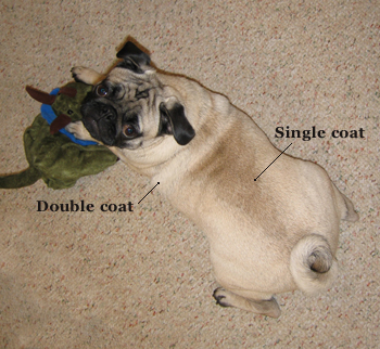 Go Pug Yourself Pug Skin And Coat