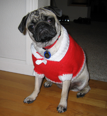 Pug_sweater_fits