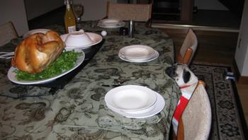 Pug_turkey