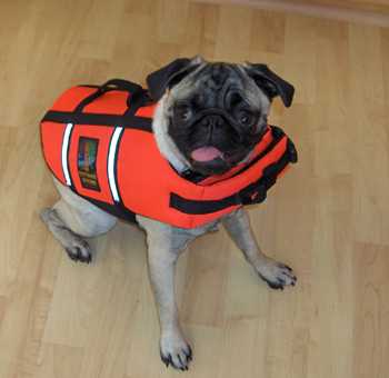 Pug Life Jacket - what is seen cannot be unseen